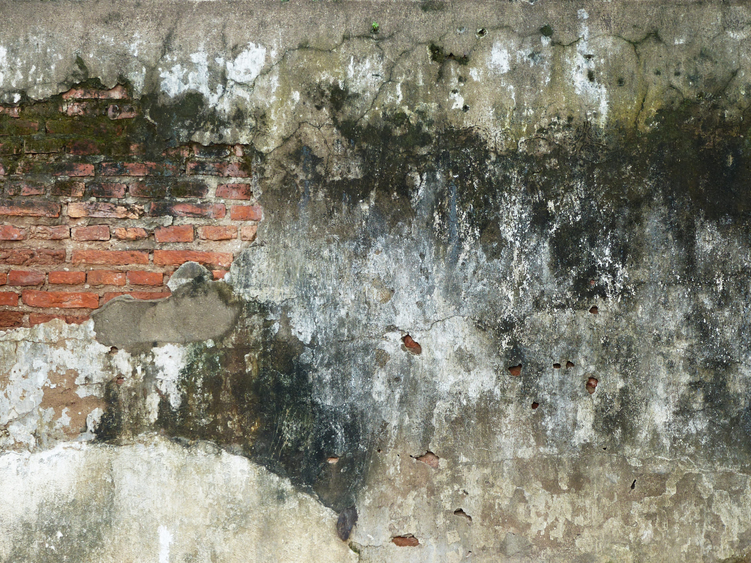 grunge wall with mold texture
